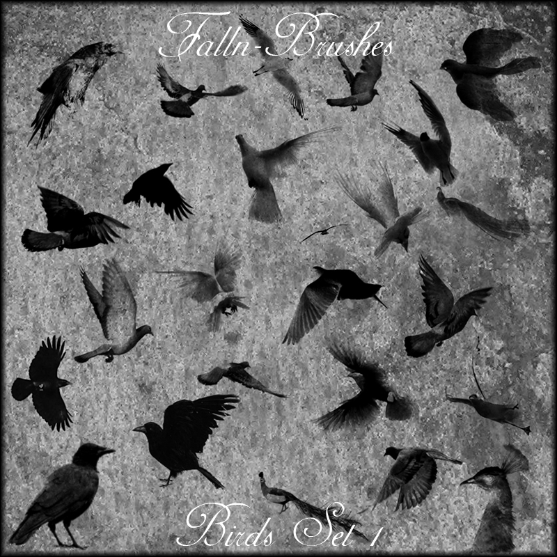 Birds Brush Set 1
