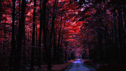 The Red Forest by Lith-1989