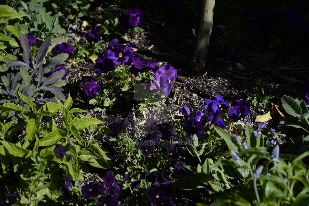 Purple Flowers by Cheloelimi