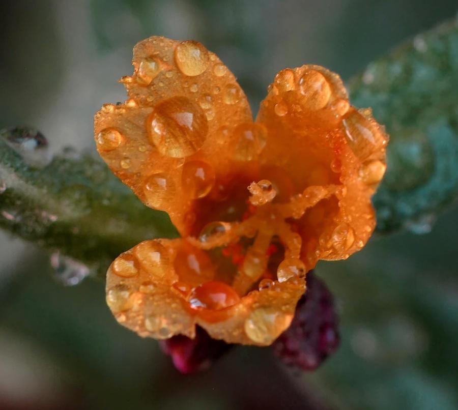 late bloomer... by shotsfiredimagedown