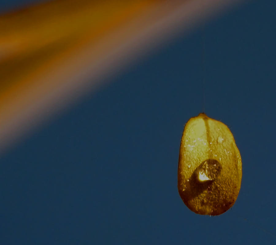 ride the wind... by shotsfiredimagedown