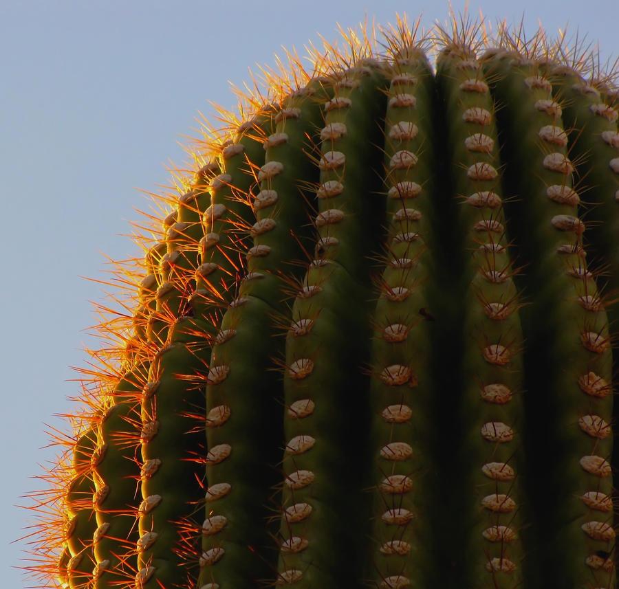 sunset saguaro... by shotsfiredimagedown