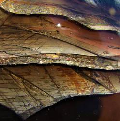 layers... by shotsfiredimagedown