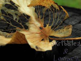 Leaf 7   Set DLM