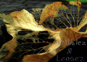 Leaf 8   Set DLM
