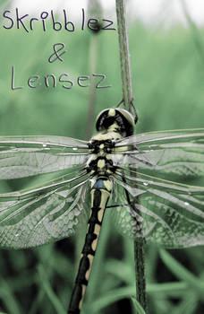 Dragonfly 2   Set DLM