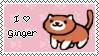 ginger by daukayai