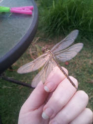 Dragonfly by DarthBloodOrange