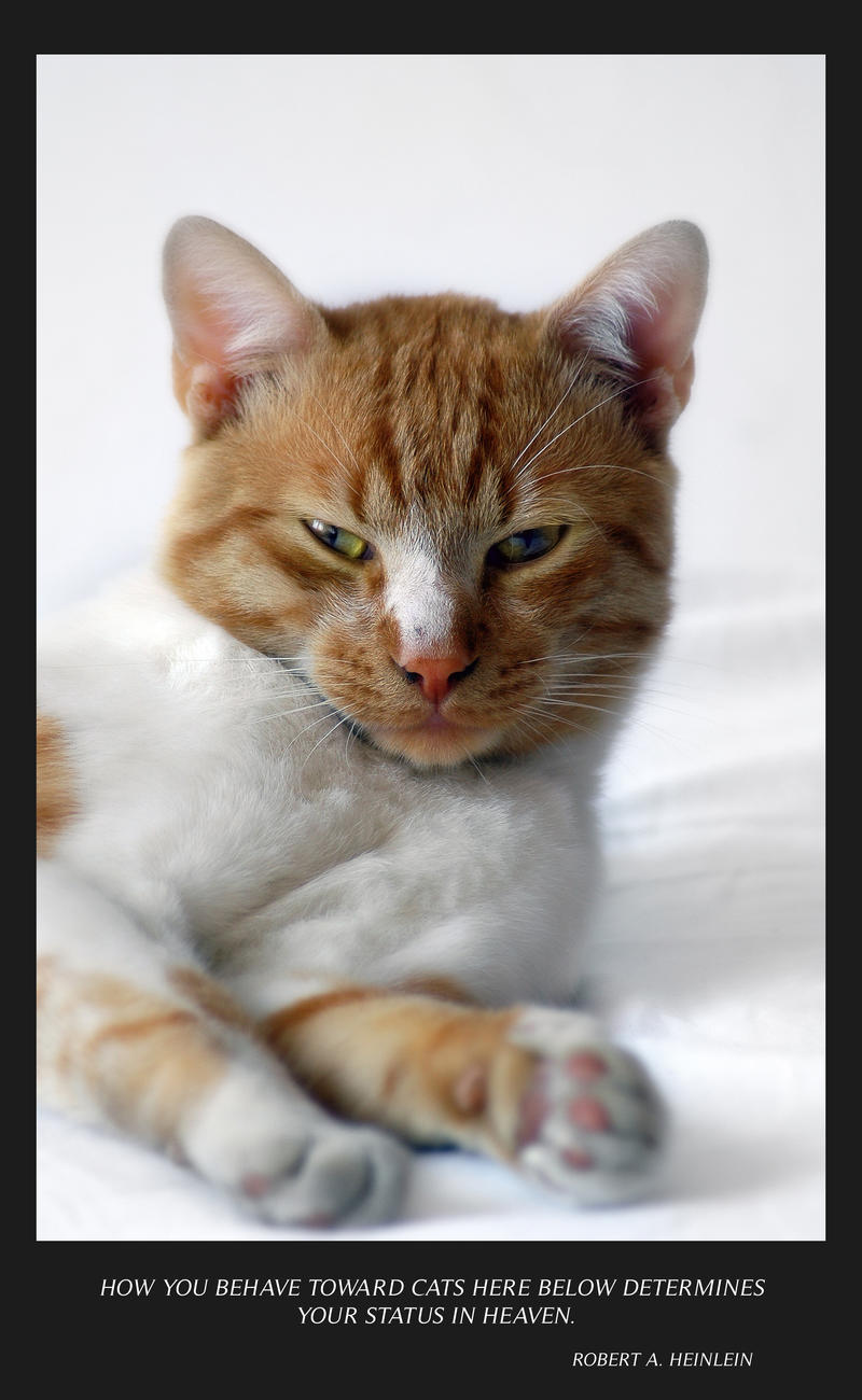 Portrait of a cat by vampyrashu