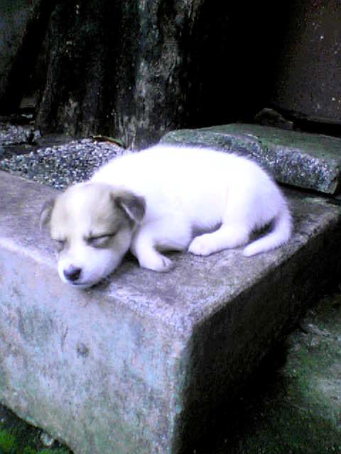 Sleepy by lunadementare