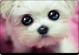 cute by winx445