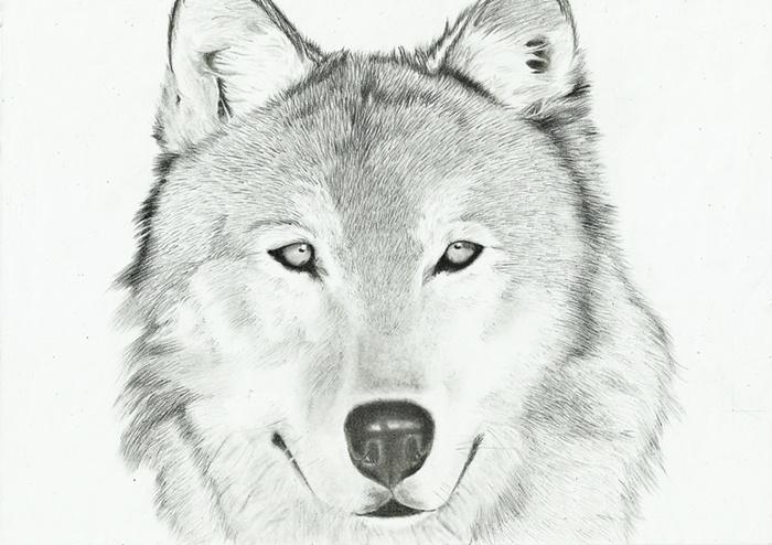 Like a wolf in the dark by KarolBarros