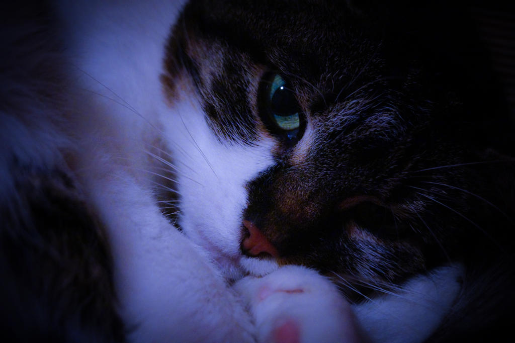 Cat II by 66Lilith66