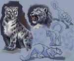 Animal study snow leopard