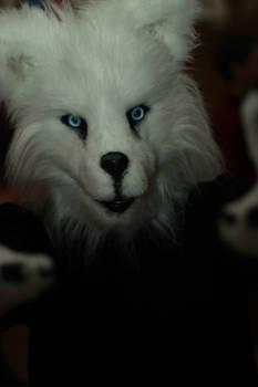 Fursuit dog: Souleil
