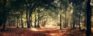Street of Leaves