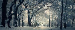 Street of Snow