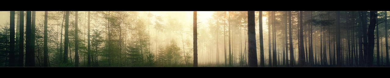http://fc09.deviantart.net/fs71/i/2011/184/2/b/a_forest_by_burning_liquid-d3kuj8v.jpg