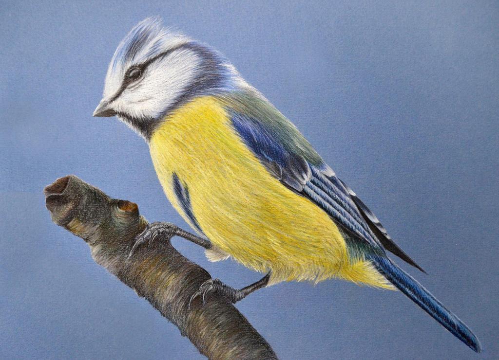 Bird - colored pencils by IrisGrass