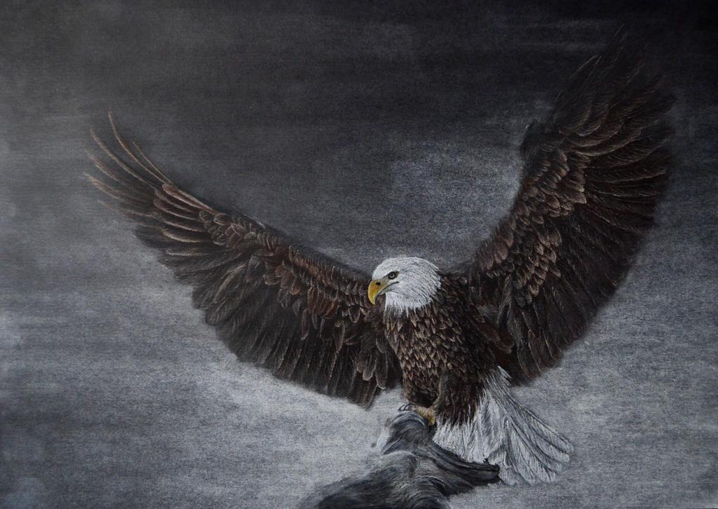 Eagle by IrisGrass