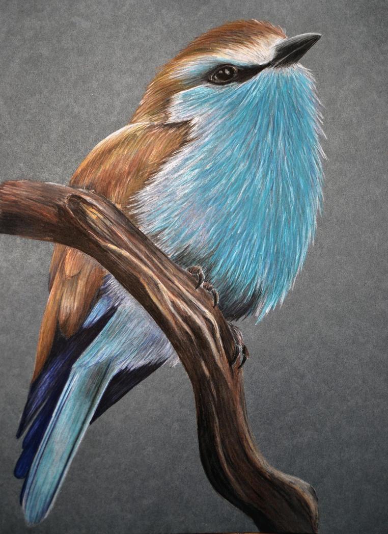 Exotic bird by IrisGrass