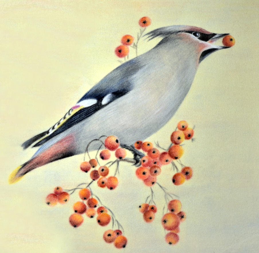 Waxwing by IrisGrass