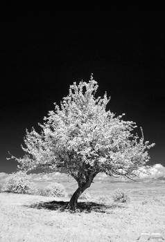 Solitary bw