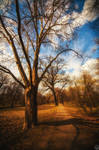 Walk in the park by andreimogan