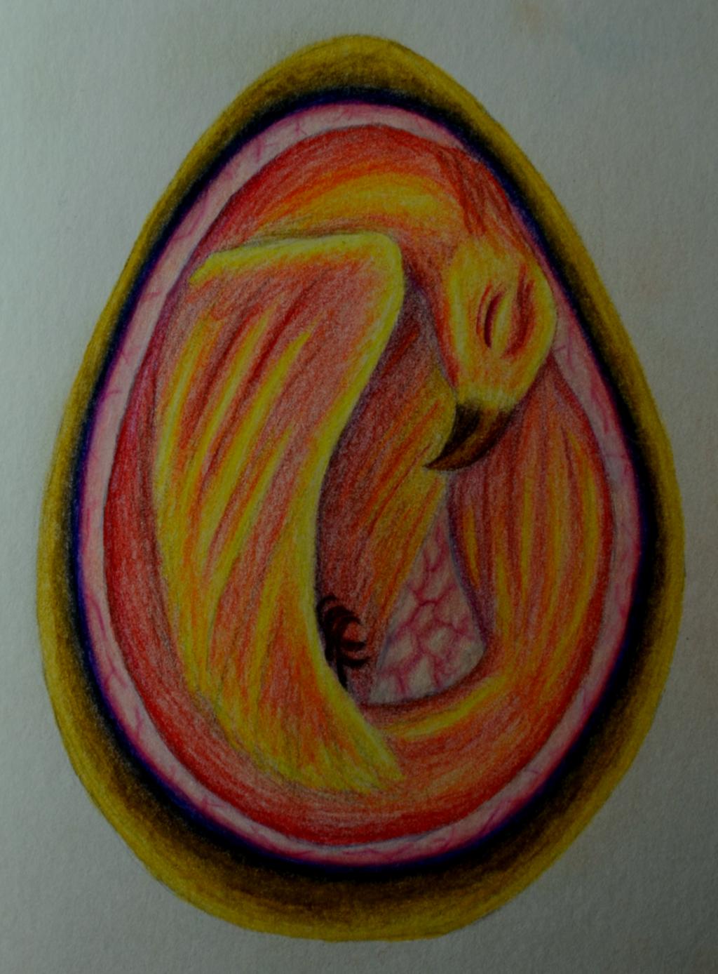 Phoenix egg by Palasferas