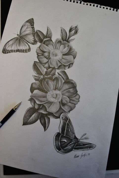 This page contains all information about pencil drawings of butterflies and flowers