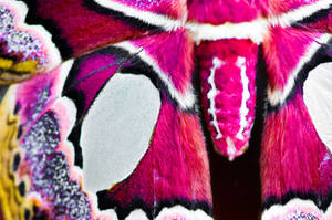 Moth by Zekidd