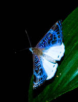 Blue by Zekidd