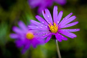 Life in purple 7 by Zekidd