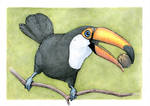 Toucan with a pecan