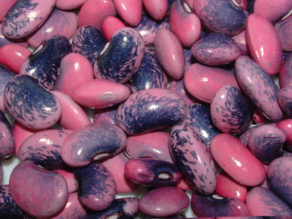 how to cook scarlet runner beans