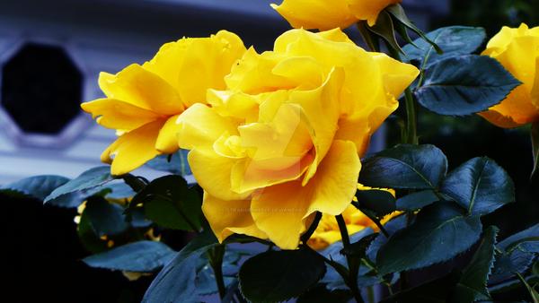 Yellow Garden by strangesheelf