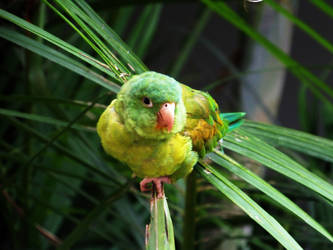 Recovered bird photograph