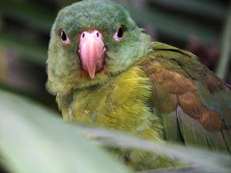 Recovered bird photograph 2