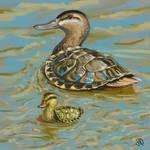 Turtle-duck
