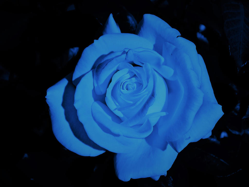 If Roses were Blue by ZombieInn