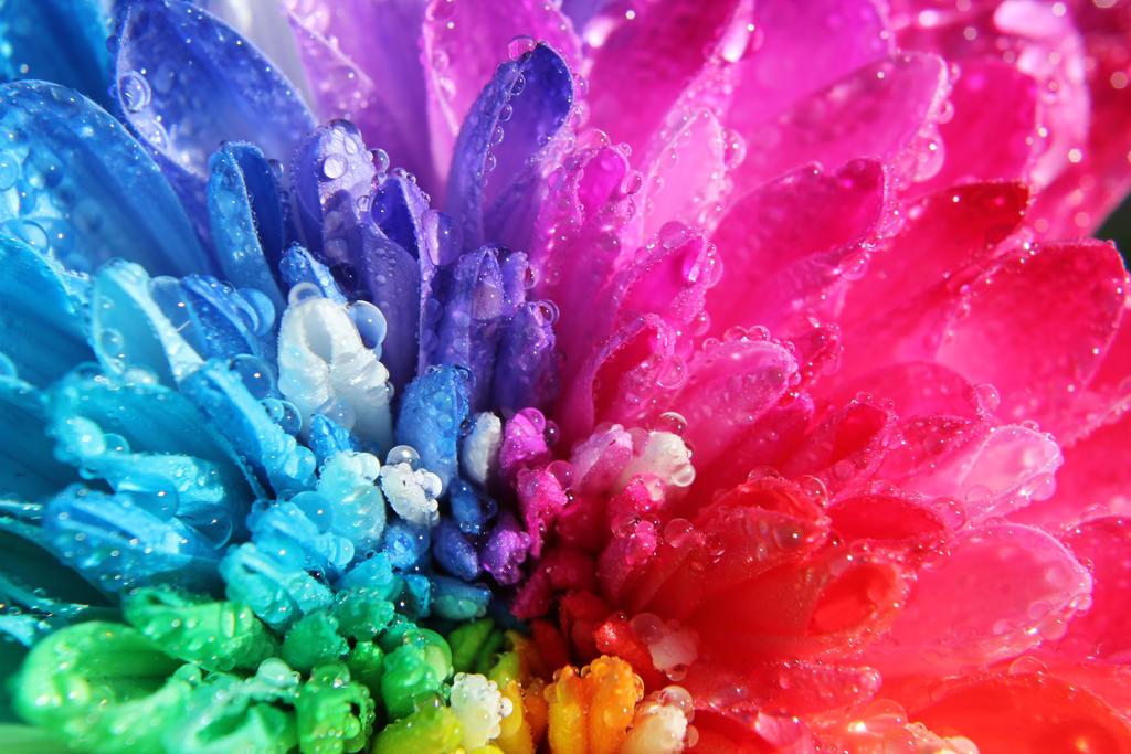 When Rainbows Cry by ZombieInn