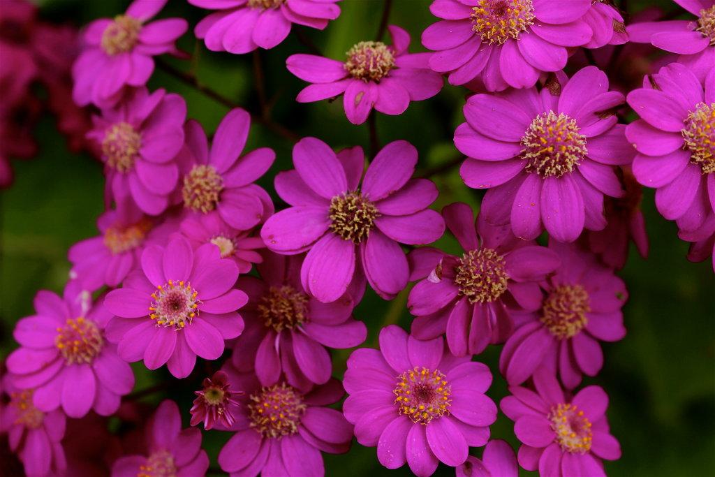 Allie Pink Happy Birthday Dear Allie by ZombieInn