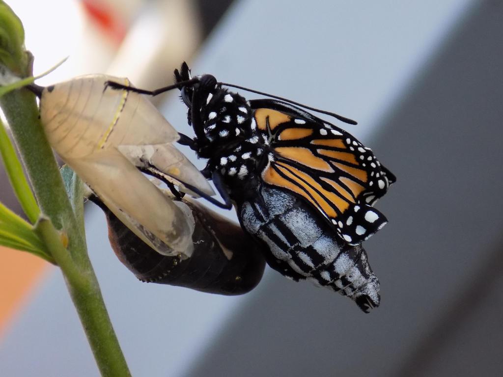 Butterfly by ZombieInn