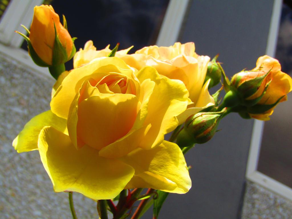 Dimi Rose by ZombieInn