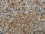 seashells by Dragnor425