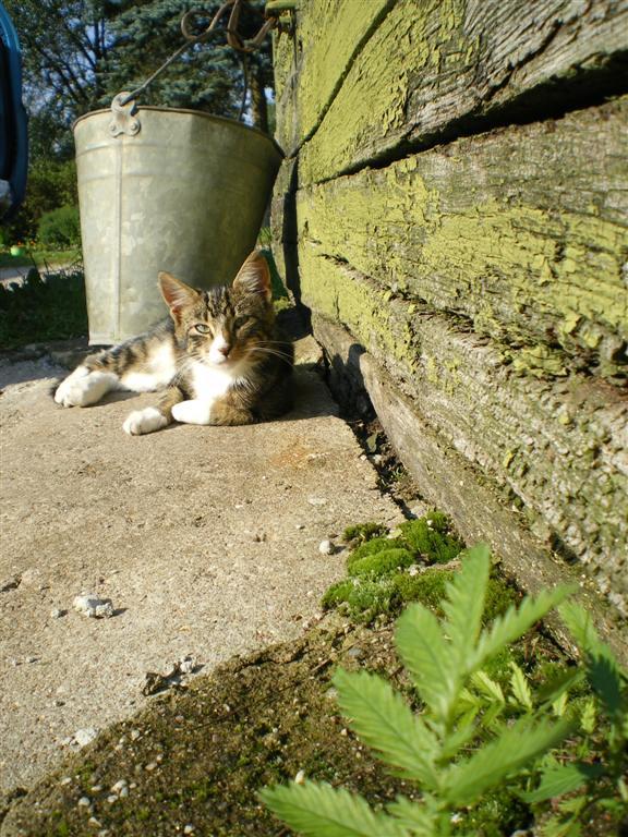 lazy cat by Astrazzz