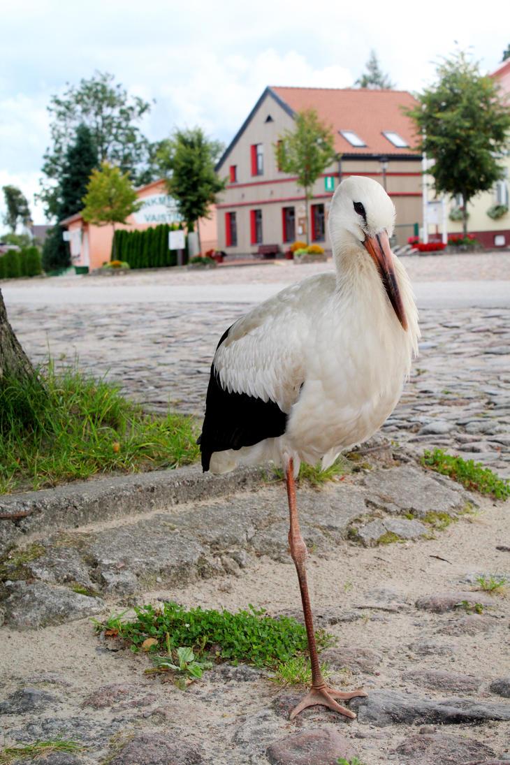 stork by Astrazzz