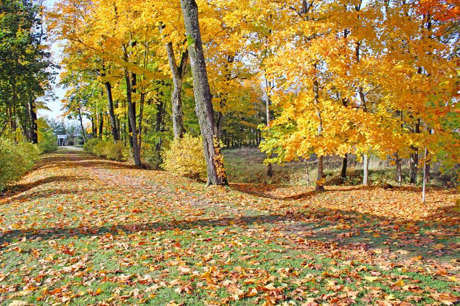 Autumn by Astrazzz