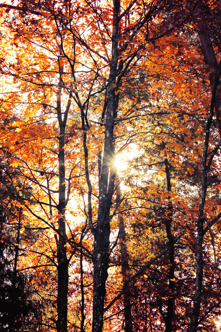 autumn and sun and trees by Astrazzz
