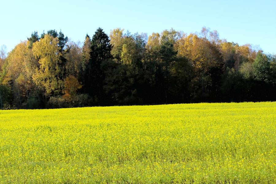 Field by Astrazzz